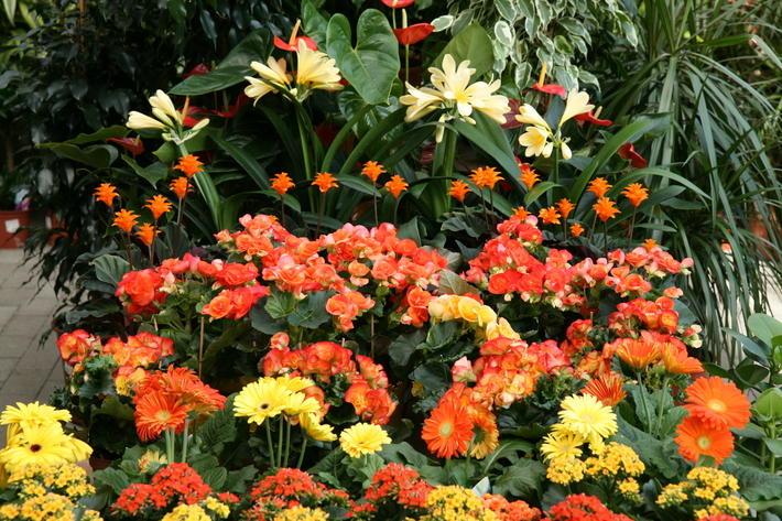 Plante D Exterieur Jardiland